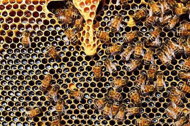 pszczoły ul zdrowie